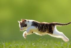 Котенок, трава, прыгать, милые животные, фоны, заставки