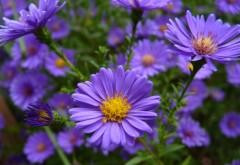 Фото нежных голубых цветов в стиле макро