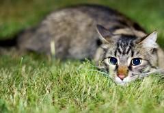 Фото замечательного серого кота