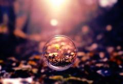 Росток в шаре, жизнь, дерево, фантазия, красиво, фото