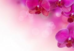 Розовая свадьба с высоким разрешением фоны, заставки