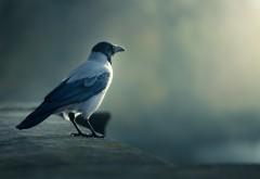 Картинка одинокой птицы которая сидит на бордюре крыш�…