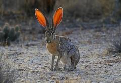 Уши кролика, трава, свет, большие уши заставки на рабоч�…