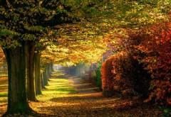 Природа, лес, парк, лес, красочные дороги, сквер, осень, �…