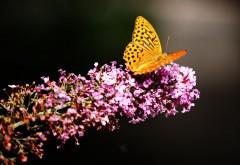 Бабочка в ботаническом саду картинки на рабочий стол