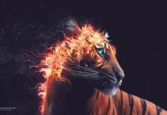 Широкоформатные обои огненного тигра из пламени беспл…