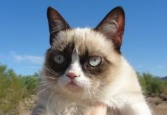 Сердитый кот заставки