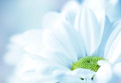 Макро изображение высокого разрешения белой, нежной р�…