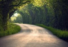 Фотография высокого разрешения дорога в лесу