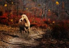 Фотография бегущей по дороге лошади