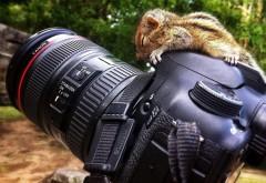 Заставка детеныша на фотоаппарате