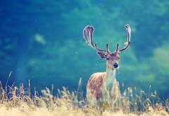 Фото оленя в природе