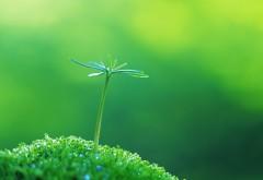 Стильное фото сделаное в стиле макро на котором изображено удивительного растения