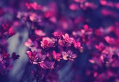 Широкоформатное макро изображение маленьких цветов