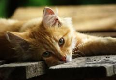 Кошка на досках