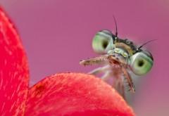 Фото маленькой стрекозы в стиле макро