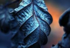 Макро фото лисенго листочка