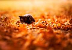 Фотография милого котенка в осенней листве