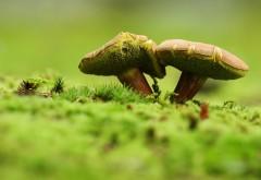 Фото в стиле макро замечательных грибочков