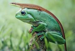 Веселая природа, ящерица на лягушке, юмористические ка…