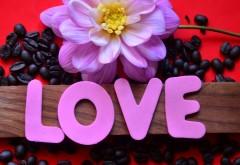 Истинная любовь, романтика, цветы, широкоформатные обои, hd