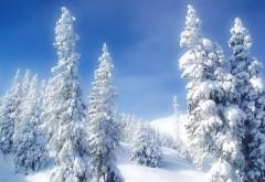 Пейзажи, Природа, Зима, Снег, Деревья, голубое небо, высокого разрешения, фото, обои