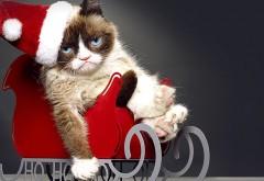Смешной кот, Новогодний котик, Санта Кот, юмор, праздник, обои для рабочего стола, картинки