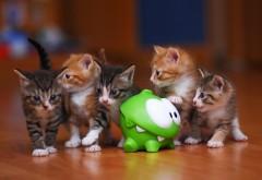 Маленькие котята играют с зеленой игрушкой обои hd для �…