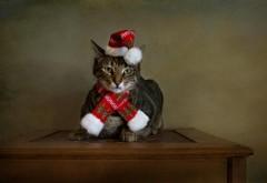 Обои для рабочего стола Кошка, праздник, Рождество, шля…