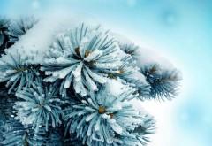 Синий снег, замороженные растения, макросъемка для раб…