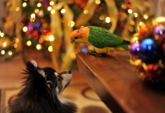 hd обои собака и попугай друзья на Новый год и Рождество