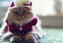 Смешной кот в форме деда мороза или санта клауса обои в…