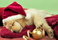Праздники, Рождество, милая собака, бесплатные картинки, сон, Новый год, санта