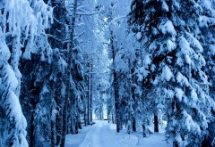 Природа, Зима, Снег, Деревья для Android обои скачать
