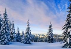 Природа, Пейзажи Горы, деревья, лес, зимние снега, холодный, белое небо, облака, HD Фотография, обои