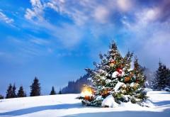 HD обои, Новогодняя елка, зима, снег, небо, холм, лес, Рождество, праздник