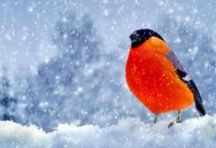 Зима, снегирь, птичка, снег, обои для рабочего стола