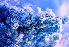 Зима, природа, дерево, синий фон, Ель, снег, мороз, Фотографии, картинки