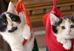 Котята, носки, праздник, рождество, пушистый, пара, Новы…