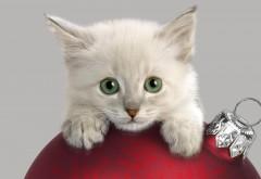 Кот, морда, рождественские украшения, любопытство, обо�…
