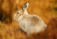 Кролик на траве размытие фона рабочего стола