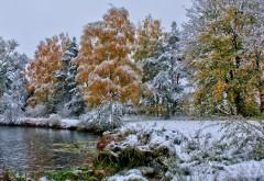 Природа, пейзажи, деревья, лес, мороз, озеро, трава, лист…