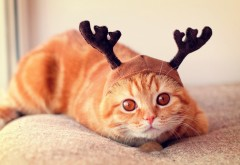 Олень-кошка, рыжая кошка, олень санты, юмор, прикол, обо�…