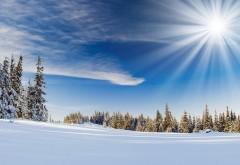Природа, пейзаж, деревья, лес, зимний снег, солнечный св…