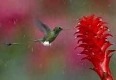Животные, колибри, птица, фотографии, цветок, обои, карт…