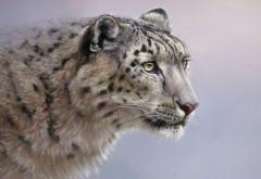 Скачать, Большие кошки, снежные барсы, Взгляд, хищник, ф…