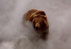 Медведь в тумане обои для рабочего стола