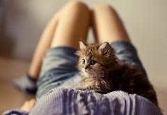 Котейка на груди у девушки