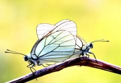 Скачать бабочка обои для рабочего стола