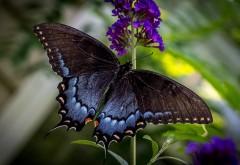 Бабочка, природа, насекомые, макро зум, высокого качест…